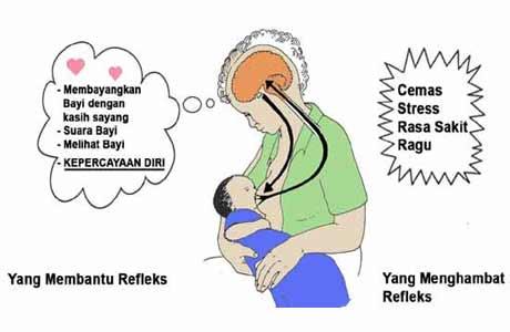 Bagaimana ASI dikeluarkan: Hormon Oksitosin (Let-Down-Reflex)